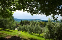 Adopt an Olive Tree in Italy….